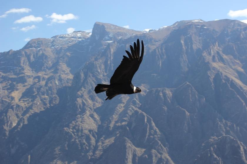Condor country